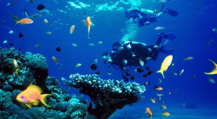 Plongée sous marine  Toutes les adresses plongée sous marine en Corse du Sud